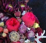 burgundy palette/FLORA botanical atelier