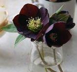 winter / FLORA floral botanical atelier / Novembertől február közepéig tartó időszak. Rengeteg különböző fenyő és örökzöld lombozatot tartogat, ezüstös árnyalatú, érdekes textúrájú növényekkel csábít - eukaliptusz, mimóza, nyuszifül. Mindez kárpótol a szűkösebb virág választékért. Csodás az amarílisz, fantasztikusak a boglárkák, anemónák, ciklámenek, a hóbogyó és a király begónia mintás levelei. Faágakkal, tobozokkal tűzdelt különleges időszak.