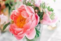 flowers / by Nina Polidoro