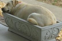 Dog / by Peggy Wingo-Wuchitech