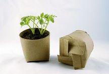 Growing a Garden / Dreams and Ideas for my garden!!