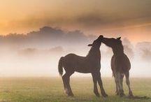Photo ideas: Animal magic