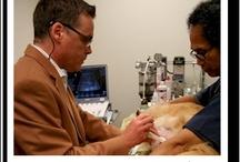 Veterinary Sonographers / by SonoPath .com