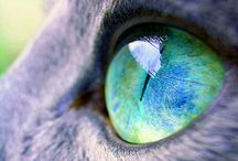 Eye see you!!!  / A collection of the most stunning eyes!!!!!