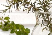 Health with Herbs