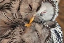 I Fucking Love Owls / by Shelby Lynn