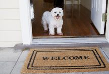 a house is not a home without a pet / by Tanya Abbate