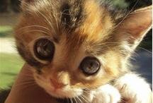 ahhhh so cute! / hearts are melting
