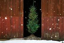 Deck The Halls / by Manic Trout