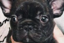 Stylish Puppy / The Dog has style.  Need I say more...
