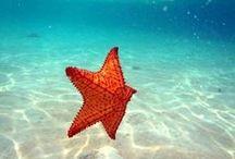 Mermaids, Seahorses, Shells and Starfish / Mermaids, Seahorses and Starfish of all shapes and sizes / by Manic Trout