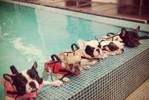 For the Pups / by Rachel Heckmann Ellis