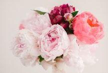 Wedding Ideas / by Rachel Heckmann Ellis
