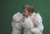 Can't Get Enough Westies / by Joan Duffy