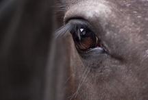Horse beauty❤❤
