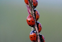 ladybugs Catherine; lots and lots of ladybugs / by Gina Howren