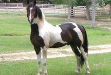 Beautiful Horses / by Joan Duffy