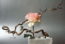 Ikebana / by Raven Riv