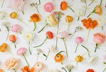 Flowers / by The Buzz Blog / Diane James Home