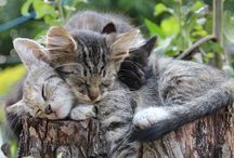 Cats / The most adorable animal