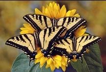 Butterflies / by Laura Moise