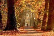 autumn//fall