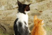 Animals / by Jenny Eskeli Jesse