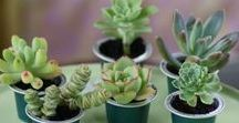 House Plants & Herbs