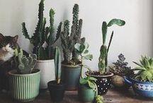 plant life / by Randi Ross