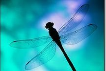 Dragonflies / Everything dragonflies