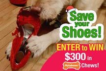 Dog Sweepstakes, Contests, Coupons and Promotions / Win $200 worth of Nylabone Products for your dog! / by Nylabone Products
