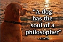 Quotes About Dogs / by Nylabone Products