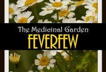 Medicinal Herbs / by The Garden Geeks