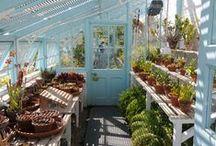 Potting Shed/Greenhouse organization
