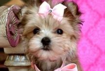 Cutie Animals <3 / by Rhiannon Barber