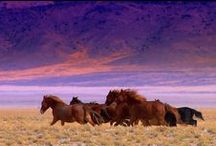 Nevada / High Desert Beauty, Western Skies, Lake Tahoe, Town of Genoa, Nevada Turquoise