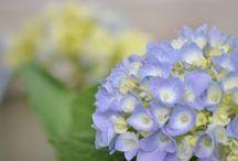 In Bloom / Flowers, succulents, pretties.  / by Emilie R. Saunders