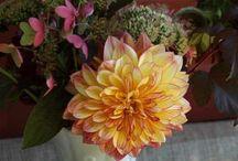 Flower Farmers of America / A gathering of Slow Flower Farmers bringing back American Grown Flowers