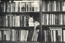Book Love / reading