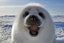 Animal Smiles / Even animals smile! :-)   www.smileschangelives.org