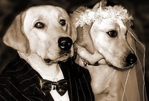 Dogwoof does weddings / Coming soon to the Dogwoof Global Sales lineup: 112 Weddings - http://dogwoofsales.com/films/112-weddings