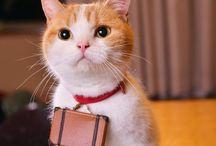 にゃんこ cat