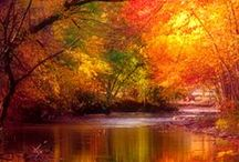 Fall for Autumn / by Debbie Ward Grasley