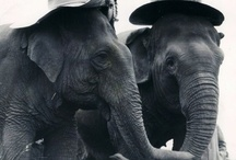 elephant love / by Lindsey Lebakken