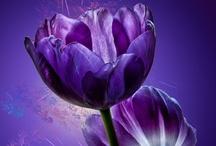 Purpleicious...gotta love purple! / by Katy Fox