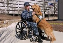 A Service Member's Best Friend  / Honoring military service dogs who put their lives on the line to keep our troops safe.  / by USAA
