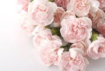 Flowers / The most beautiful and wonderful photos of flowers