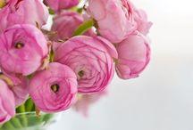 Flowers | Ranunculus / Pictures of ranunculus