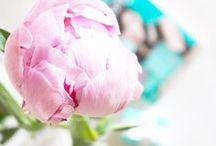 Flowers   Peonies / The most beautiful photos of peonies