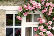 House Exteriors & Gardens / Cozy gardens. My wonderland!